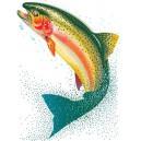Takhle velká ryba